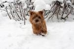rizzo in de sneeuw